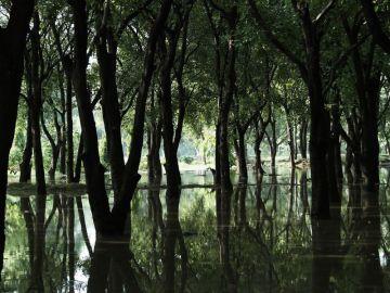 El pantano, siempre presente en la mente de los protagonistas.